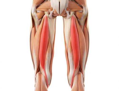 The effects of the Bowen technique on hamstring flexibility over time